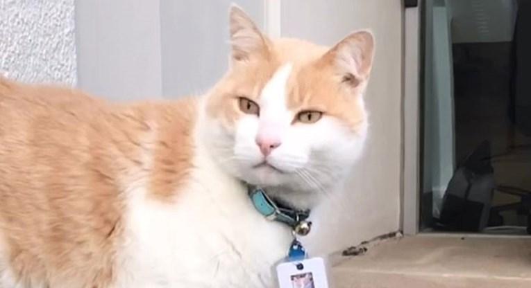 Mačak radi kao osiguranje u bolnici i svi ga obožavaju